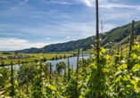 Mosel-Traumpfade, Weinberge