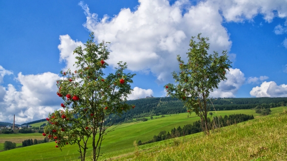 Pension Am Roten Hammer in Oberwiesenthal, Natur
